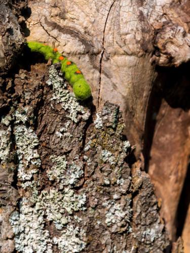 Kleine Raupe in großem Baum